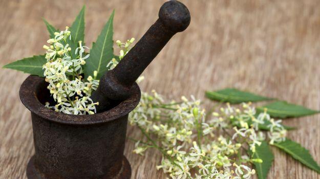 Listy a kvety nimbovníka v tradičnej metóde spracovania